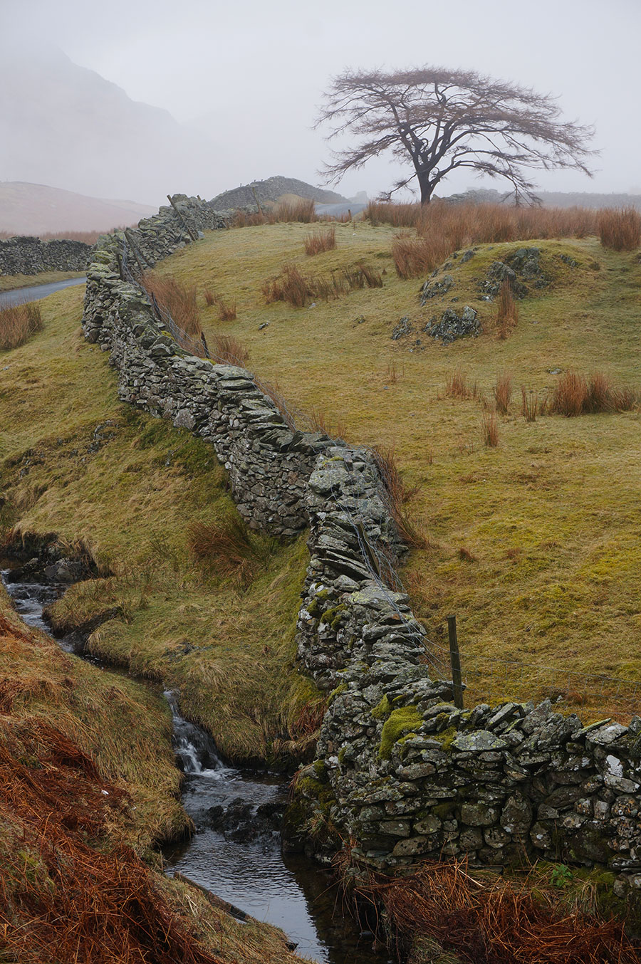 "A tree on ""The Struggle"" between Ambleside and Kirkstone."