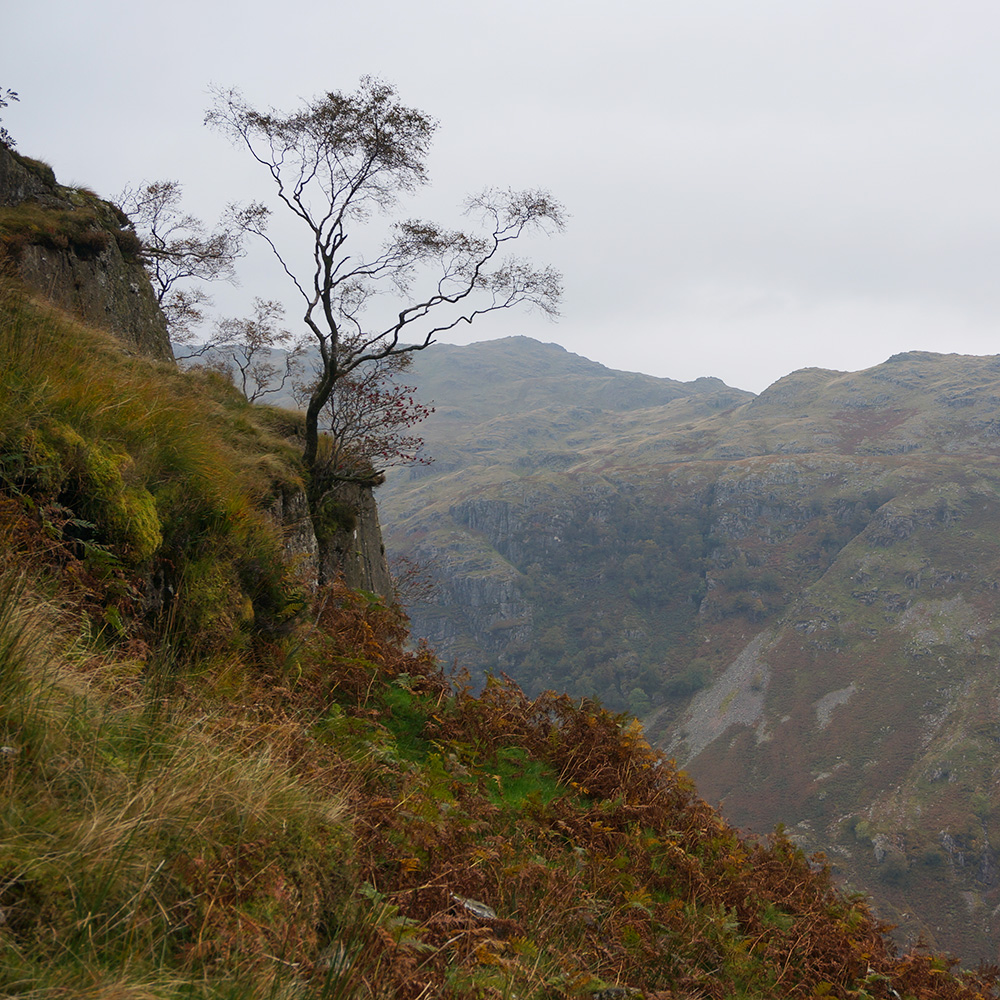 A tree on Eagle Crag