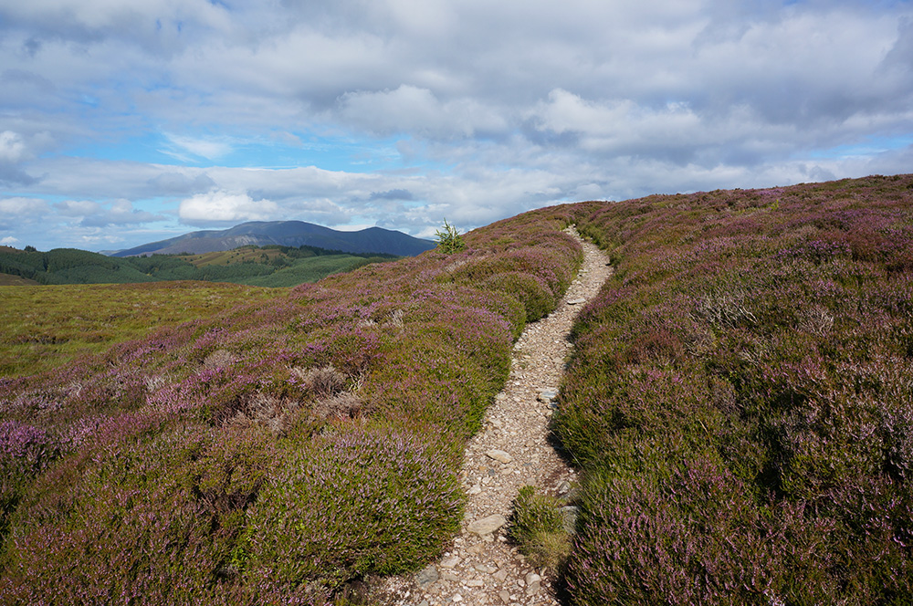 Beautiful footpath through the heather