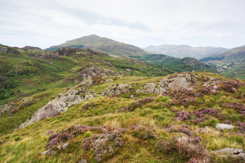 Harter Fell from Wallowbarrow Crag