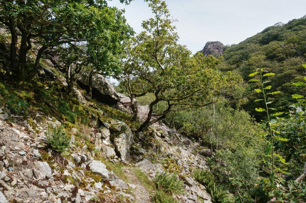 The path at Wallowbarrow Gorge