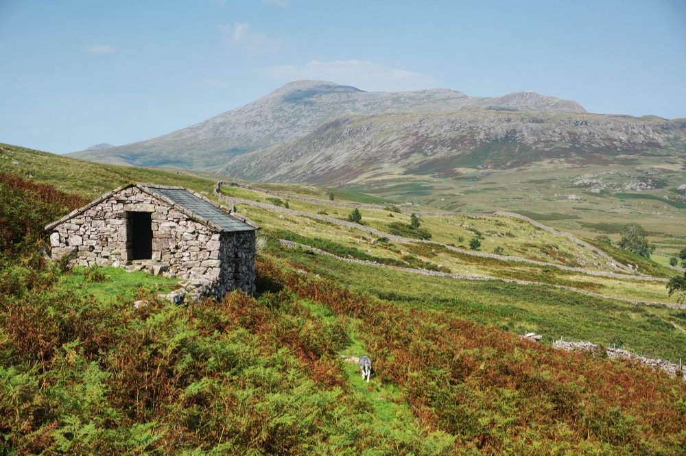 Stone hut and Scafell